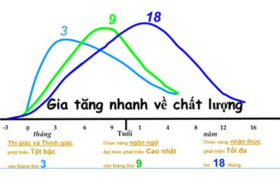 Những giai đoạn phát triển não bộ của trẻ - Tin180.com (Ảnh 2)