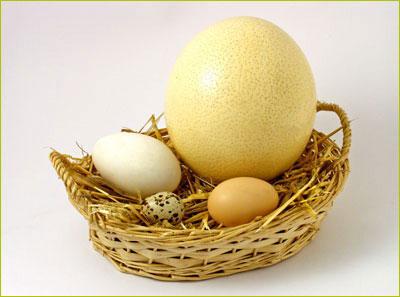 Ăn trứng ngỗng đẻ con thông minh?