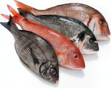 Cá là loại thực phẩm bổ dưỡng nhưng trẻ cần được tập ăn từ từ