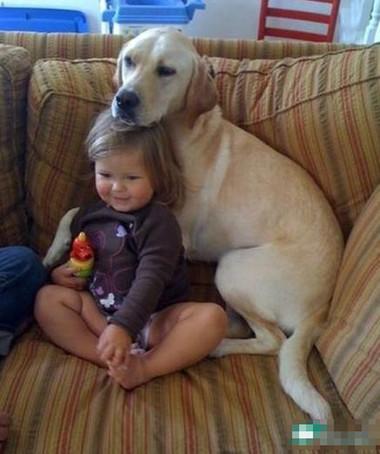 Cần để mắt tới trẻ khi có thú vật ở gần