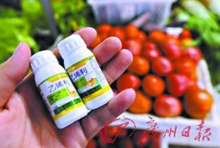 Loại thuốc thúc chín có chứa Ethephon được sử dụng phổ biến tại Trung Quốc.