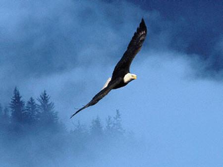 Hãy giúp con trở thành con đại bàng dũng mãnh, tự tin sải cánh trên bầu trời