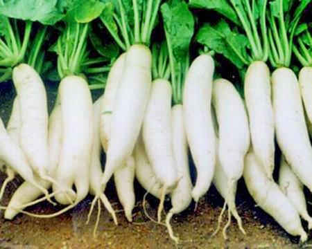 Củ cải trắng rất có lợi cho sức khỏe.