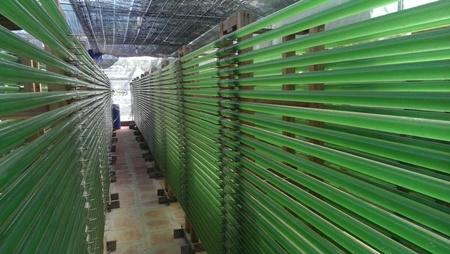 Công nghệ nuôi tảo Spirulina trong ống kín tại Hà Nội